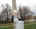 Zarybiono staw przy ul. Dobrskiej_5